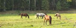 Horses grazing at Meadow Springs Guest Ranch